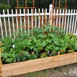 Rookie Garden Mistakes