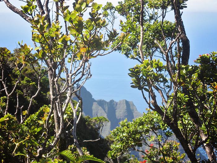 Hawaii Card 2 044_web