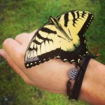 Confessions Of A Domestiphobic: It's Quite Possible That This Butterfly Changed My Life.